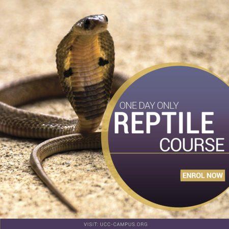 Reptile Course
